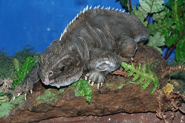 9 loài vật hiếm cực độ có khả năng tuyệt chủng trước cả khi bạn biết đến chúng - Ảnh 8.