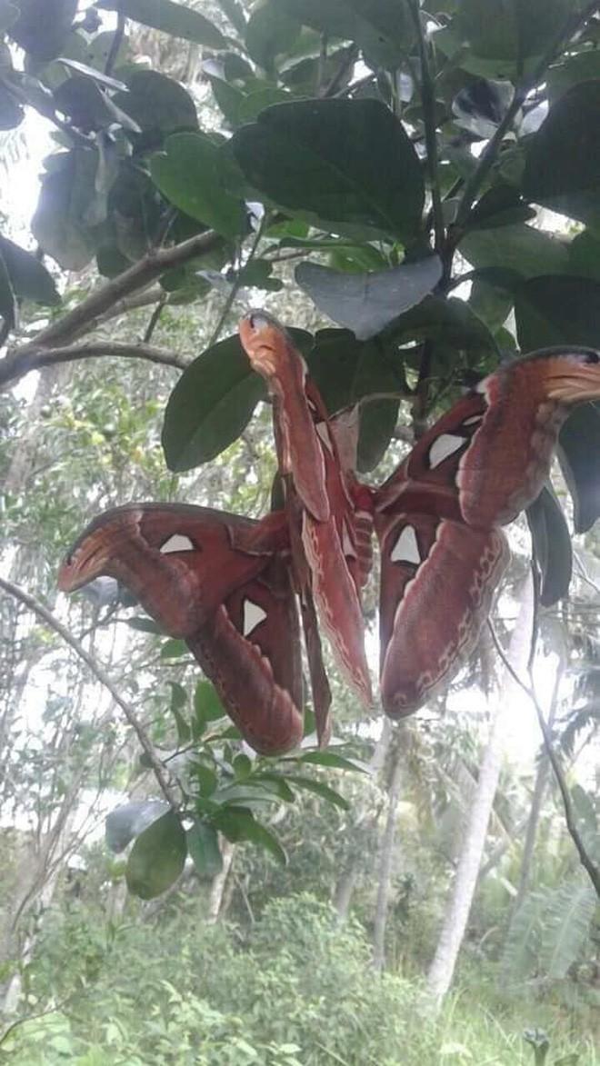 Truy tìm nguồn gốc sinh vật giống rắn 3 đầu đang gây bão: Hóa ra là loài tuyệt đẹp và khá phổ biến ở Việt Nam - Ảnh 1.