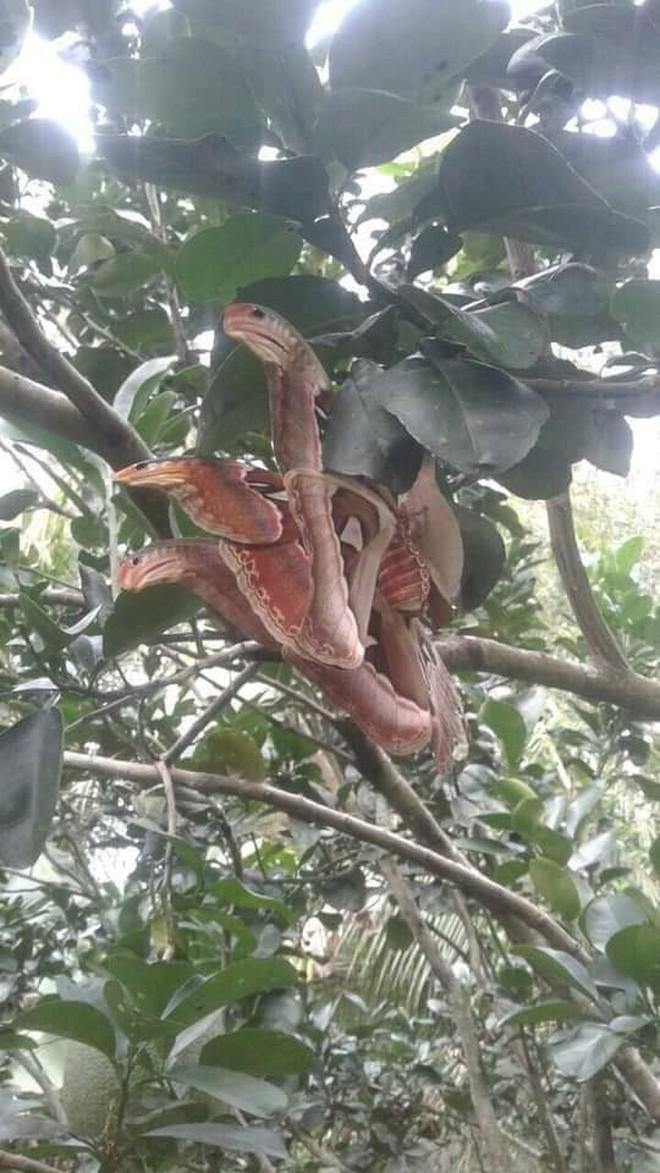 Truy tìm nguồn gốc sinh vật giống rắn 3 đầu đang gây bão: Hóa ra là loài tuyệt đẹp và khá phổ biến ở Việt Nam - Ảnh 2.