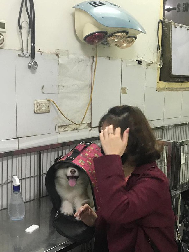 Hà Nội: Đưa chó cưng đi khám, cô gái bị tàu hất văng sang một bên, may mắn thoát chết - Ảnh 2.