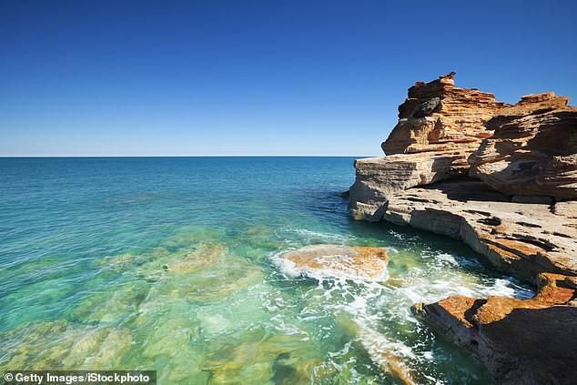 Quái vật kỳ dị thân nhiều xúc tu ngoe nguẩy xuất hiện tại bờ biển Úc - Ảnh 3.