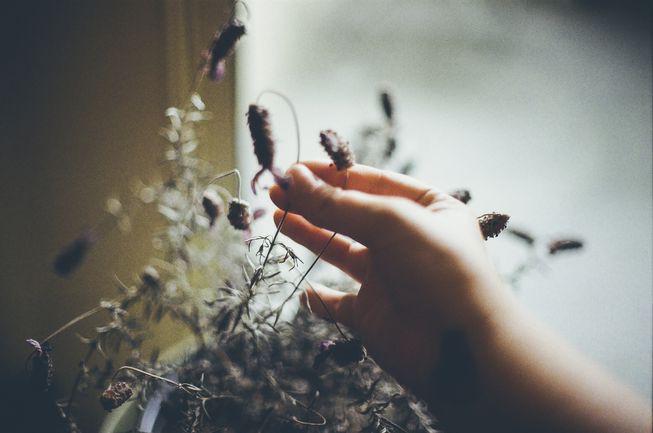 Có yêu đến mấy cũng đừng chạm vào cây, vì chúng thật sự không thích thế - Ảnh 1.
