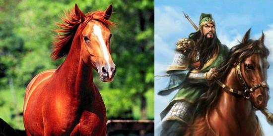 Lời nguyền sát chủ của ngựa Xích Thố: 4 đời chủ nhân chỉ 1 người được chết yên lành! - Ảnh 5.