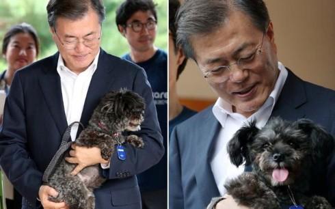 Hàn Quốc thay đổi mạnh thái độ với nghề thịt chó và thói quen ăn chó - Ảnh 1.