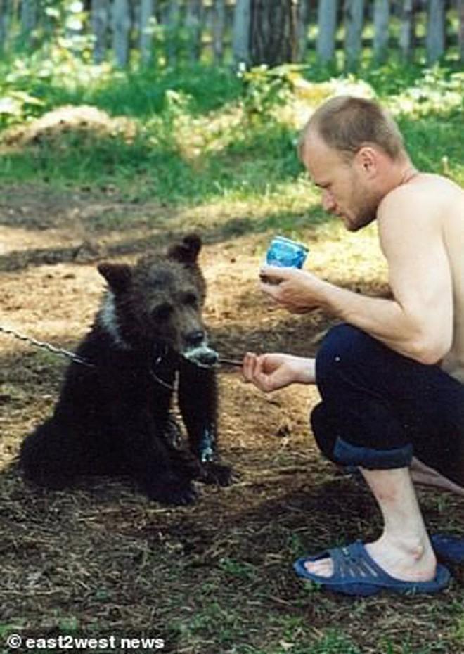 Nga: Chú thợ săn nuôi dưỡng gấu con từ tấm bé, lớn lên gấu xổng chuồng rồi ăn thịt chủ luôn - Ảnh 2.