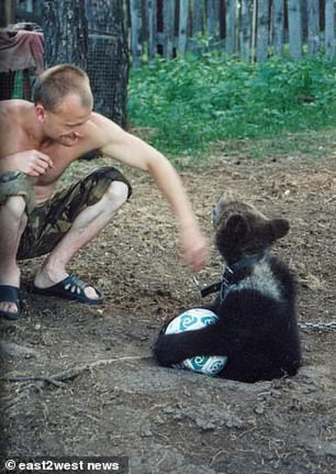 Nga: Chú thợ săn nuôi dưỡng gấu con từ tấm bé, lớn lên gấu xổng chuồng rồi ăn thịt chủ luôn - Ảnh 3.