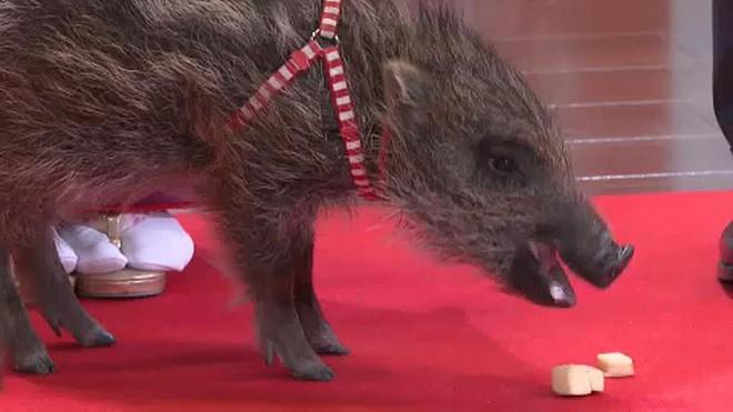 Người Nhật rộn ràng trong ngày làm việc cuối năm, chuẩn bị tiễn năm Chó đón năm mới Lợn rừng - Ảnh 2.