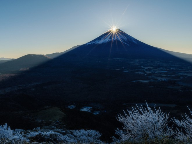 Người Nhật rộn ràng trong ngày làm việc cuối năm, chuẩn bị tiễn năm Chó đón năm mới Lợn rừng - Ảnh 7.