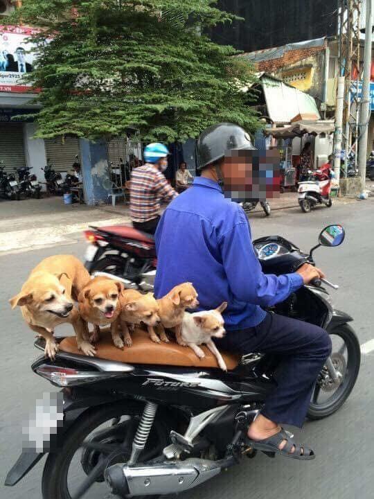 Chuyện những đàn chó khốn khổ: Đu bám trên yên xe, cùng chủ... drift qua mọi nẻo đường - Ảnh 3.