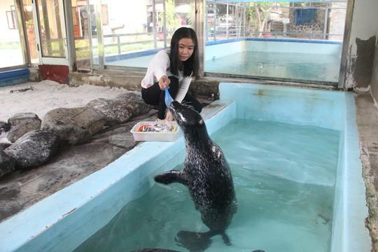 Kỳ công nuôi chó biển ở Nha Trang - Ảnh 3.