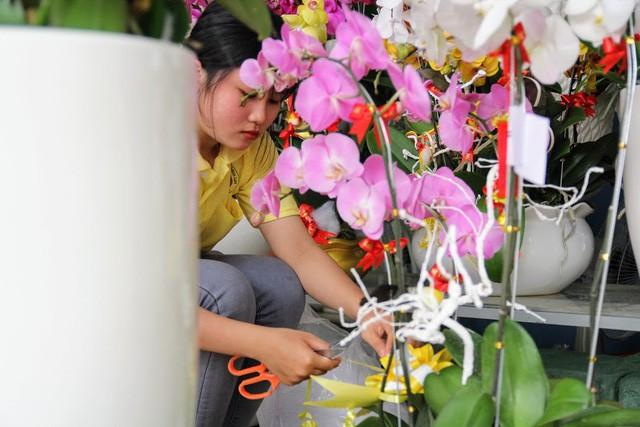 1 triệu đồng một cành lan, người Sài Gòn đổ xô mua - Ảnh 8.