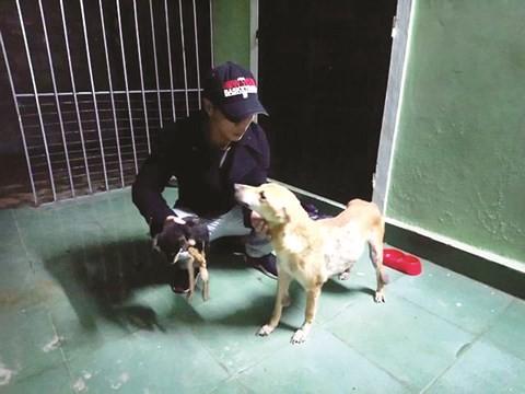 Chàng trai 8X đầu tư hàng trăm triệu đồng xây trạm cứu hộ chó, mèo bị bỏ rơi - Ảnh 1.