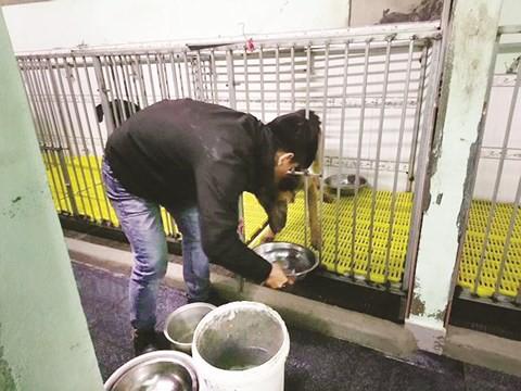 Chàng trai 8X đầu tư hàng trăm triệu đồng xây trạm cứu hộ chó, mèo bị bỏ rơi - Ảnh 3.