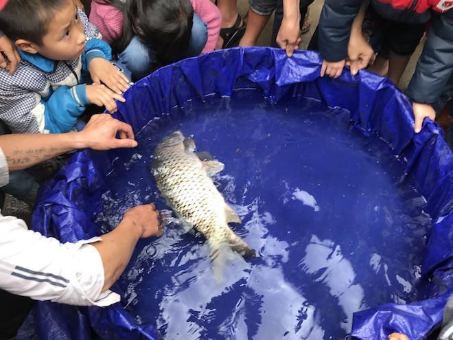 Đã bắt con cá nổi ở kênh mà người dân ùn ùn kéo đến xem mấy ngày Tết - Ảnh 4.