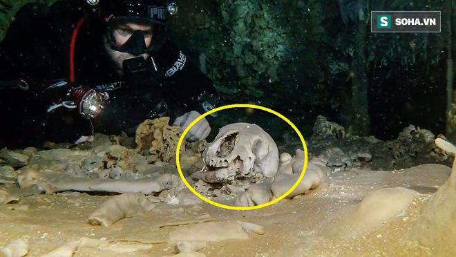 Lặn xuống hang động lớn nhất thế giới, phát hiện thế giới bí ẩn của người Maya - Ảnh 3.