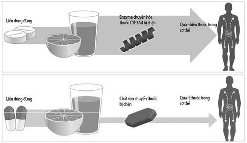 Tương tác bất lợi của nước bưởi với một số loại thuốc - Ảnh 1.
