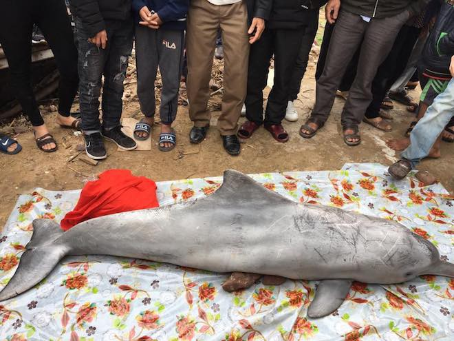 Cá heo chết dạt vào bờ, nhiều người đến xem rồi sờ vào xác cá lấy may - Ảnh 1.