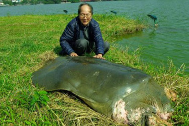 PGS Hà Đình Đức: Họ bảo tôi không làm gì cho Hồ Gươm, khiến rùa chết còn bảo thủ - Ảnh 1.