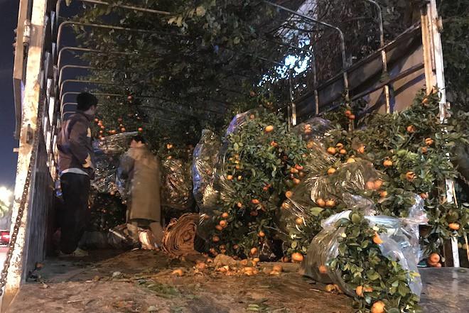 Trắng đêm ngồi co ro đốt củi sưởi ấm để canh đào, quất, hoa Tết - Ảnh 3.