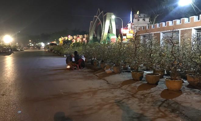 Trắng đêm ngồi co ro đốt củi sưởi ấm để canh đào, quất, hoa Tết - Ảnh 2.
