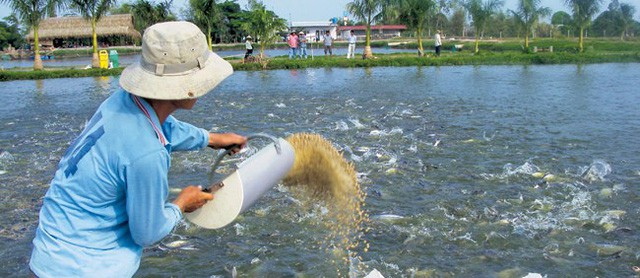 Tiến vào địa hạt thức ăn chăn nuôi, Vingroup đang tìm đến mỏ vàng của CP, Masan, Dabaco, và đông đảo các ông lớn ngoại - Ảnh 3.