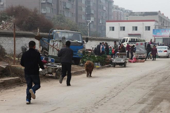 Bi kịch của Ngao Tây Tạng - từ thần khuyển triệu đô thành những con thú bị ruồng bỏ - Ảnh 6.