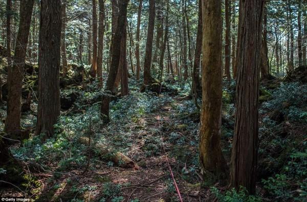 Khu rừng 'tự sát' ở Nhật Bản: Những hình ảnh tưởng chừng chỉ có trong phim kinh dị - Ảnh 1.