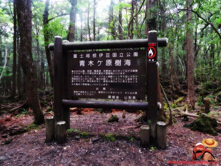 Khu rừng 'tự sát' ở Nhật Bản: Những hình ảnh tưởng chừng chỉ có trong phim kinh dị - Ảnh 2.