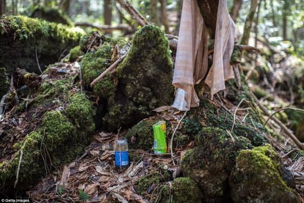 Khu rừng 'tự sát' ở Nhật Bản: Những hình ảnh tưởng chừng chỉ có trong phim kinh dị - Ảnh 3.