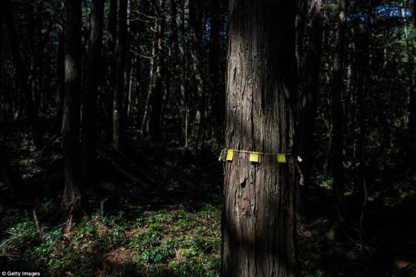 Khu rừng 'tự sát' ở Nhật Bản: Những hình ảnh tưởng chừng chỉ có trong phim kinh dị - Ảnh 4.