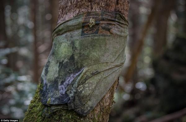 Khu rừng 'tự sát' ở Nhật Bản: Những hình ảnh tưởng chừng chỉ có trong phim kinh dị - Ảnh 5.