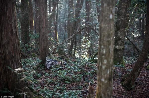 Khu rừng 'tự sát' ở Nhật Bản: Những hình ảnh tưởng chừng chỉ có trong phim kinh dị - Ảnh 9.