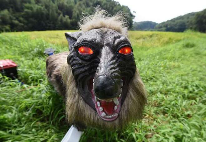 Nông dân Nhật Bản dùng robot chó sói để bảo vệ mùa màng nhưng thoạt nhìn trông thật khiếp sợ - Ảnh 1.