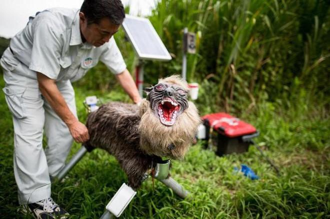 Nông dân Nhật Bản dùng robot chó sói để bảo vệ mùa màng nhưng thoạt nhìn trông thật khiếp sợ - Ảnh 2.
