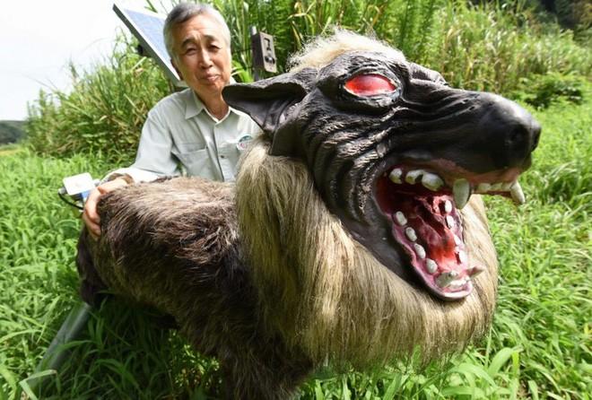 Nông dân Nhật Bản dùng robot chó sói để bảo vệ mùa màng nhưng thoạt nhìn trông thật khiếp sợ - Ảnh 3.