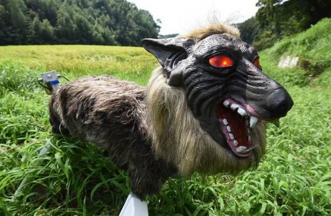 Nông dân Nhật Bản dùng robot chó sói để bảo vệ mùa màng nhưng thoạt nhìn trông thật khiếp sợ - Ảnh 4.