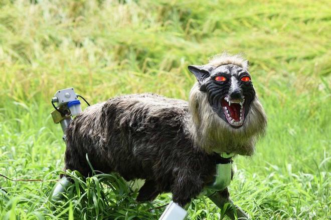 Nông dân Nhật Bản dùng robot chó sói để bảo vệ mùa màng nhưng thoạt nhìn trông thật khiếp sợ - Ảnh 5.