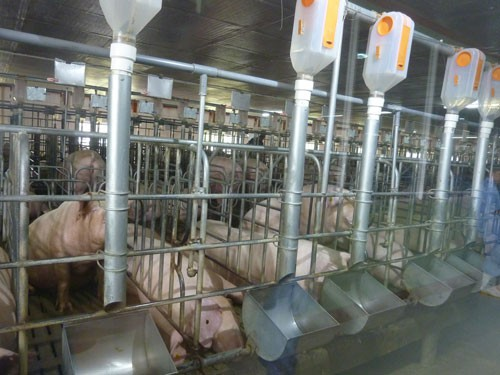 Chăn nuôi vẫn khó tứ bề: Giảm giá thành - vấn đề sống còn - Ảnh 1.