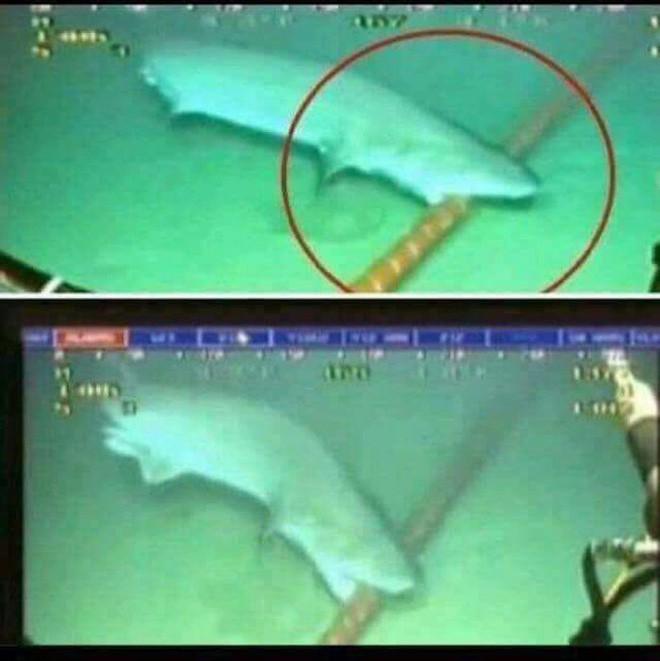 Thử đặt máy quay trong lòng núi lửa dưới đáy biển, khoa học bất ngờ khi tìm thấy thứ này - Ảnh 4.