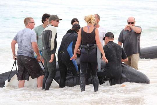 Úc: Hơn 100 con cá voi mắc cạn, phơi xác trên bãi biển - Ảnh 1.