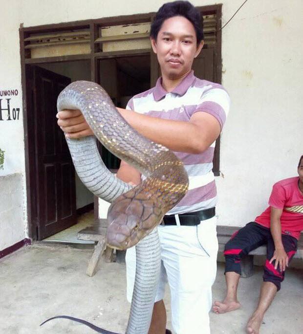 24h qua ảnh: Sốc với hổ mang chúa khổng lồ chưa từng thấy ở Indonesia - Ảnh 6.