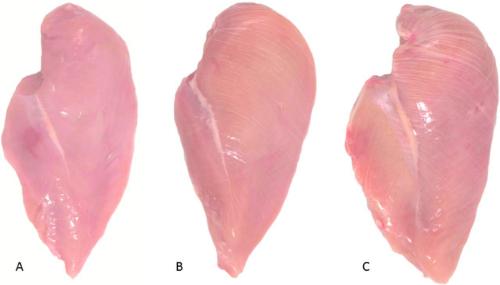 Sự thật không nhiều người biết về những miếng thịt gà có vằn trắng: Nên ăn hay nên bỏ? - Ảnh 2.
