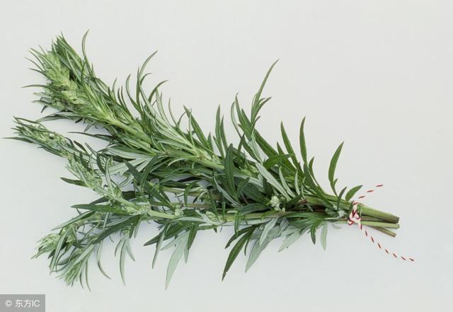 Ngải cứu được xem là thảo dược quý trong sách cổ: 5 cách dùng hiệu quả bạn nên tham khảo - Ảnh 3.
