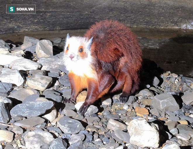 Thám hiểm hang động dài nhất châu Á, các nhà khoa học phát hiện sinh vật kỳ lạ - Ảnh 1.