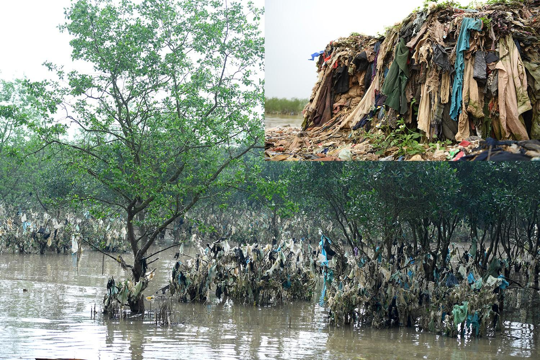 Rừng cây treo rác tại Đa Lộc, do thủy triều mang vào hay lý do quanh co không nhận trách nhiệm