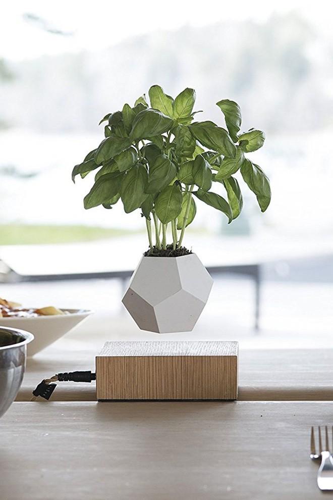 15 kiểu chậu cây tạo nên vẻ đẹp cuốn hút cho không gian sống của bạn  - Ảnh 2.