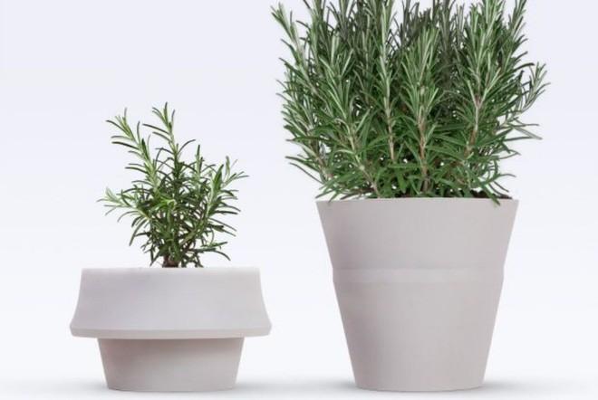 15 kiểu chậu cây tạo nên vẻ đẹp cuốn hút cho không gian sống của bạn  - Ảnh 14.