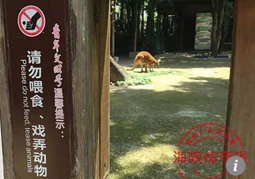 Du khách Trung Quốc ném đá kangaroo tới chết - Ảnh 2.