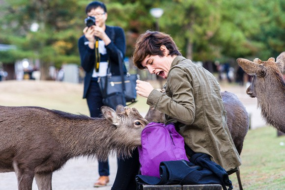 Hơn 200 vụ hươu cắn khách du lịch ở công viên Nhật Bản, chính quyền phải gấp rút ra bản hướng dẫn cho hươu ăn an toàn - Ảnh 6.
