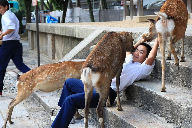 Hơn 200 vụ hươu cắn khách du lịch ở công viên Nhật Bản, chính quyền phải gấp rút ra bản hướng dẫn cho hươu ăn an toàn - Ảnh 7.